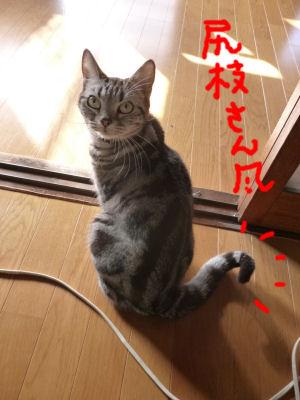 尻枝さん風?