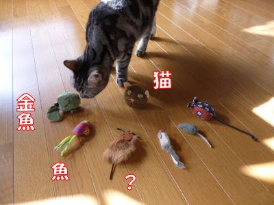 しまはネズミ?大尽