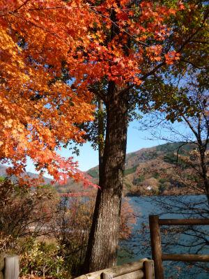 終わりかけの紅葉in草木湖2
