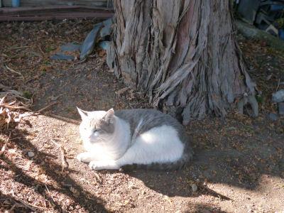 旅先で猫2