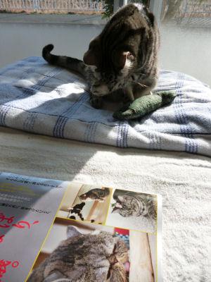 忙しい猫2