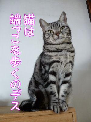 猫も端を歩く