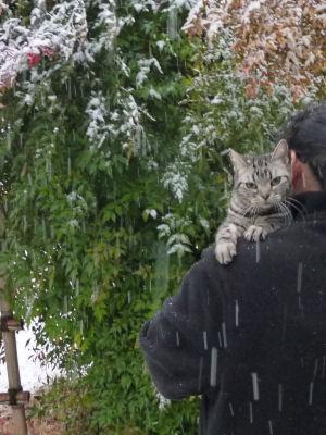 この冬初めてちゃんと雪が降った