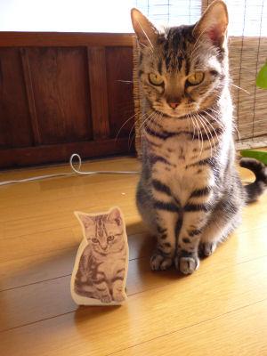 可愛い猫クッキー