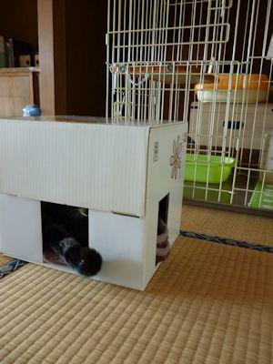 隠れ家チェック