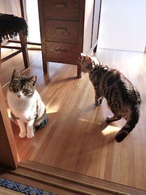 猫の会話はヒミツ