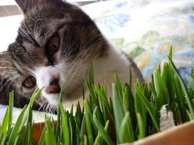 ふくと猫草1