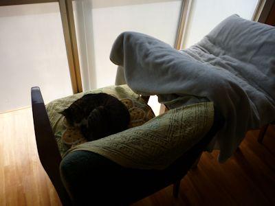 猫ベッドは??