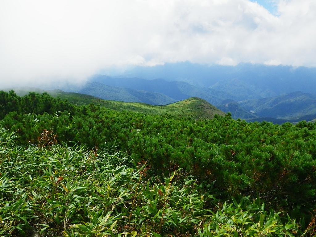 ハイマツ林
