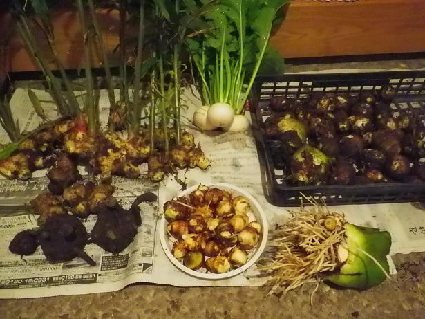 2011.11.1の畑の収穫