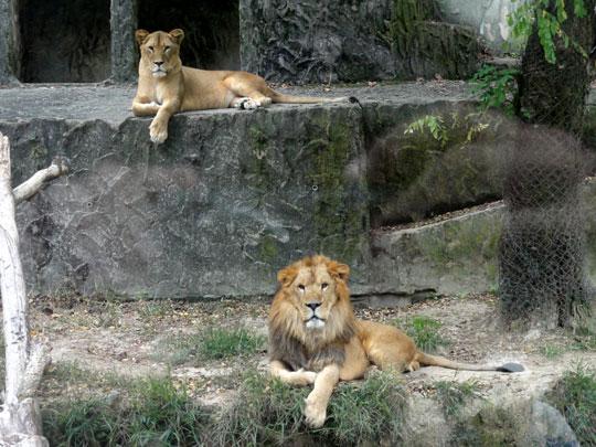 2011.10.16安佐動物園 1