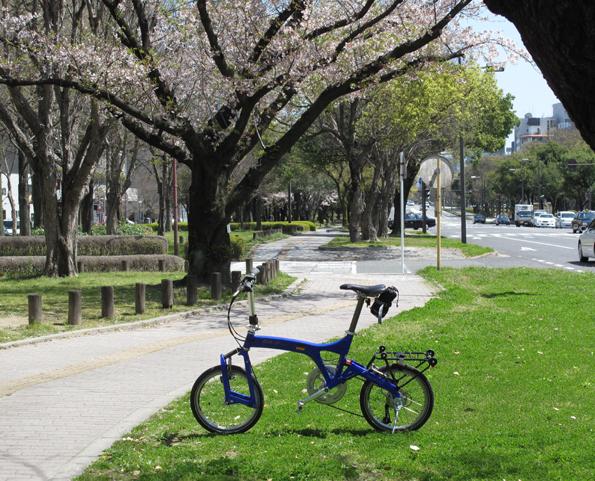 平和大通り桜とBD3