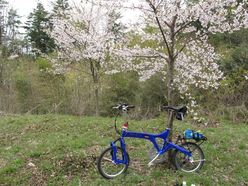 極楽寺山峠の桜満開