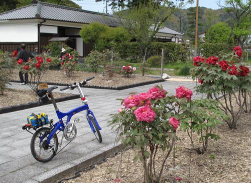 吉川公園牡丹園BD-3