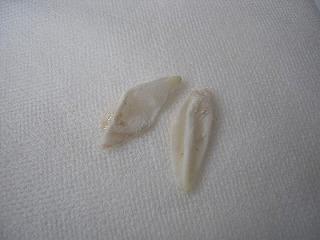 ポッポ卵の殻