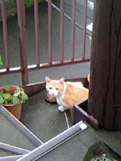 お向かいのネコ2