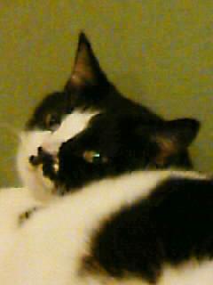 07914猫1