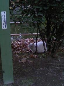 武蔵関公園_猫