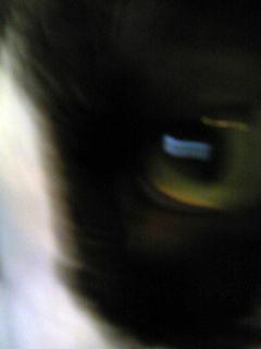 猫071127