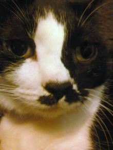 猫071128