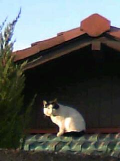 08_02_10_猫2