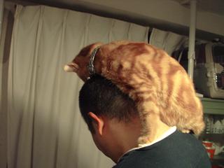 くろのはらぐろ-登る猫_1