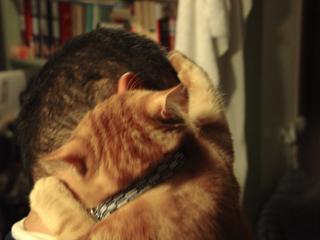 くろのはらぐろ-登る猫_2