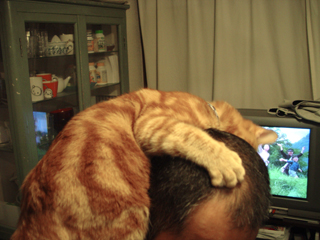 くろのはらぐろ-登る猫_5