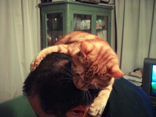 くろのはらぐろ-登る猫_8