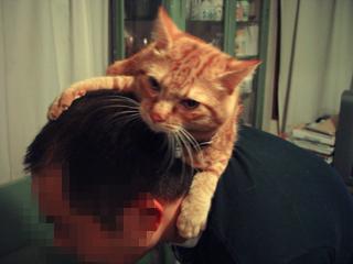 くろのはらぐろ-登る猫_9