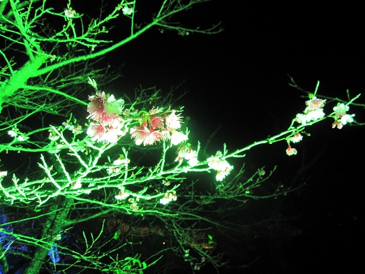7 夜桜お七