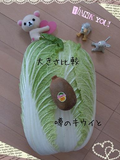 実家庭産 白菜