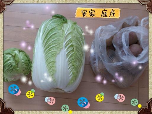 実家庭産 グリーンボール 白菜 ジャガイモ