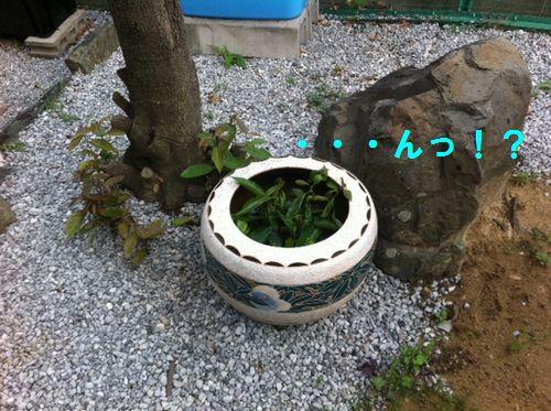 金魚鉢01
