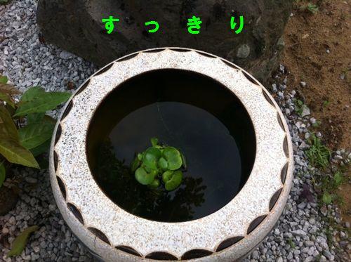 金魚鉢03