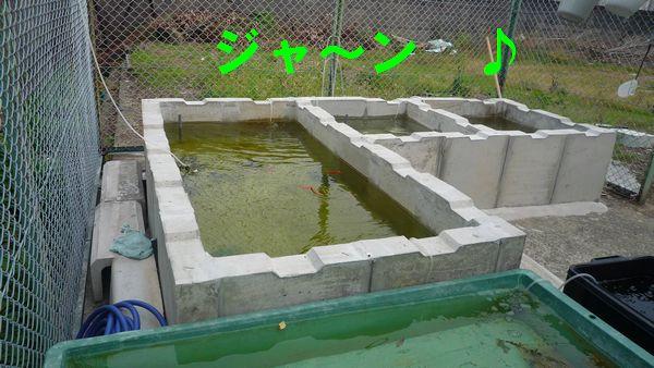 たたき池01