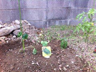 新野菜たち