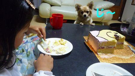 ケーキひな見る