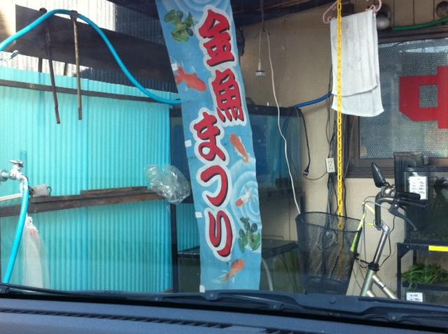 金魚屋02