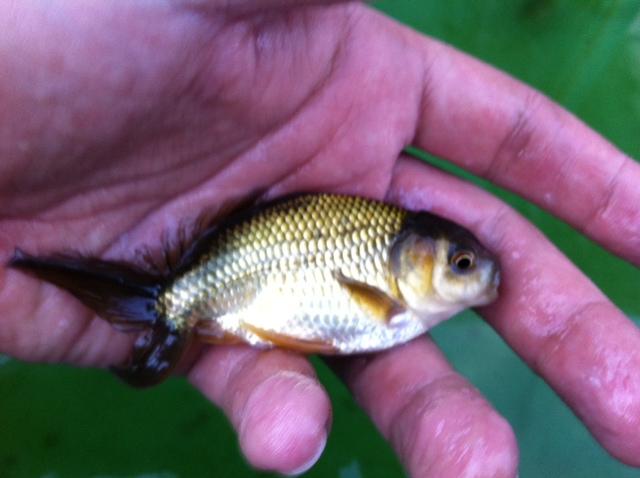 稚魚555