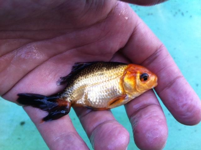 稚魚444