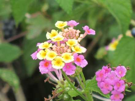 野の花 3