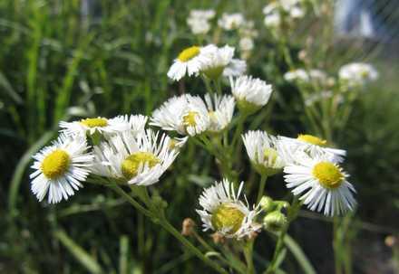 野の花 1