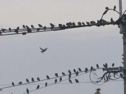 夕方の鳥1