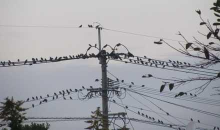 夕方の鳥2