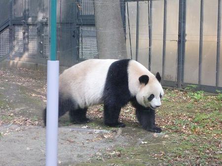 ueno zoo 023