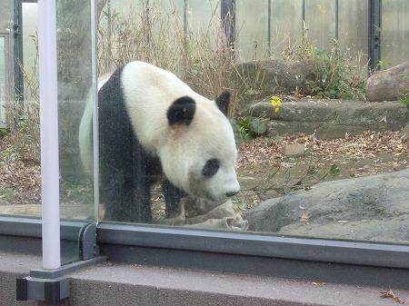 ueno zoo 022