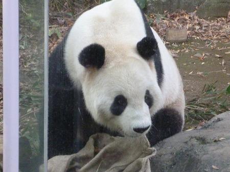 ueno zoo 021