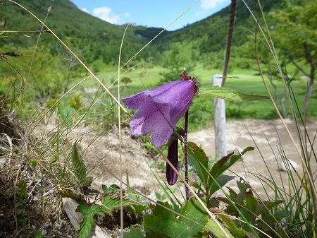 2012.8.19.karikomi 041