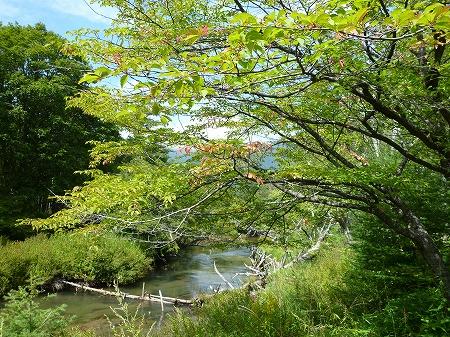 2012.9.9.senjyo.odasiro 006